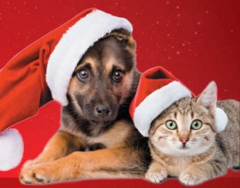 Menhelyi állatok karácsonya